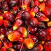 Le Cameroun devient importateur de l'huile de palme gabonaise