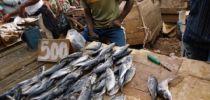 La BAD approuve un financement de plus de 55 milliards FCFA pour soutenir la production du bétail et du poisson au Cameroun