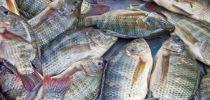 Le Cameroun a importé 181 678 tonnes de poissons à 114,3 milliards FCFA en 2017, principalement sur le marché africain