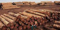 Le ralentissement de la demande chinoise fluidifie les exportations du bois camerounais vers l'Europe, à partir du port de Douala