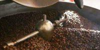 La transformation locale du café au Cameroun a baissé de 1 503 à 962 t au cours de la campagne 2017-2018